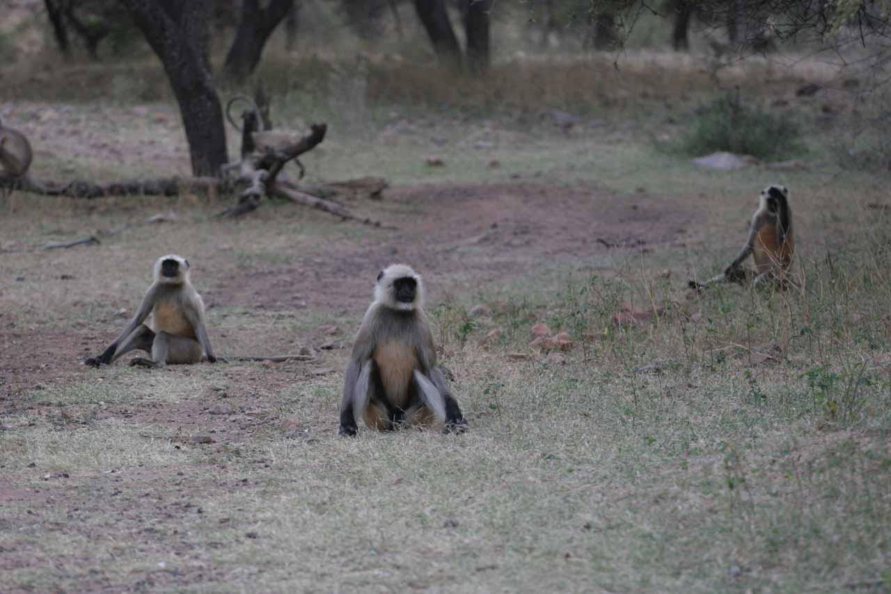 Monkeys keeping us company as we had to go potty