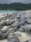 Rarotonga_100_jx_01122010 - Lots of coral rocks as we walked around the motu