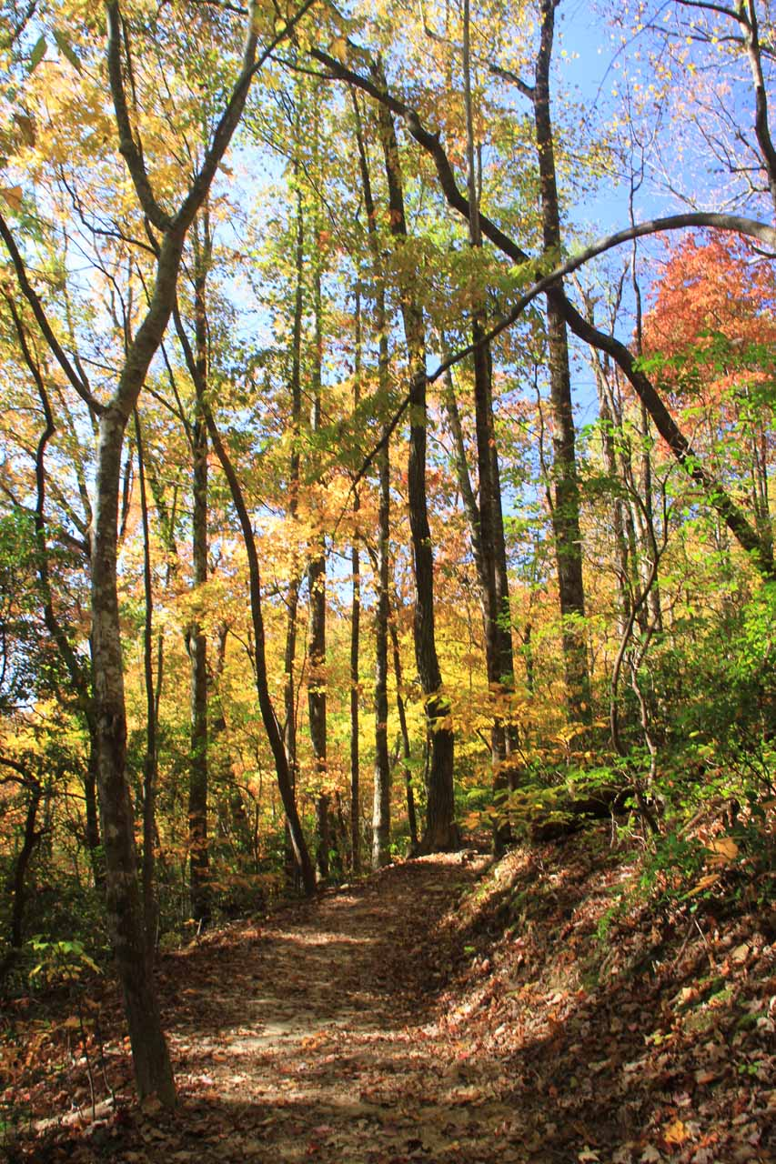 Fall colors on the trail to Raven Cliff Falls