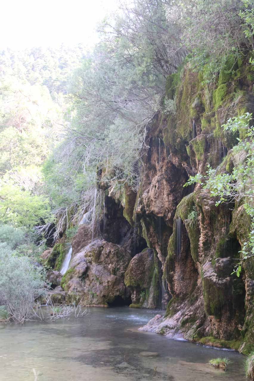 Taking a closer look at the part of the Nacimiento del Río Cuervo that still had water