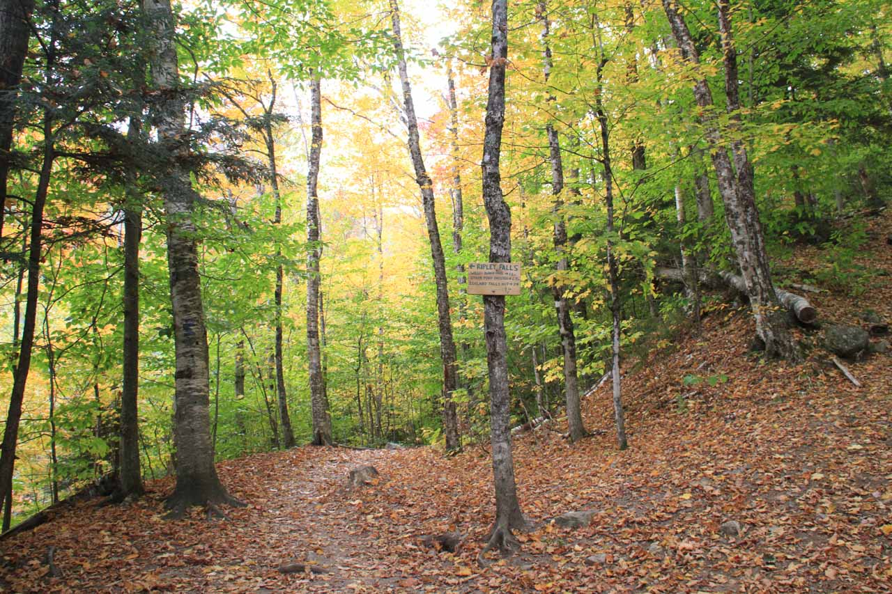 The junction with the Ethan Pond Trail