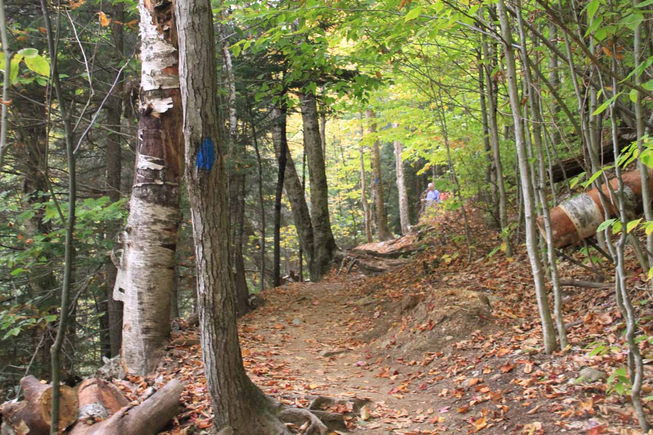 Like the Arethusa Falls Trail, the Ripley Falls Trail also followed blue hashes