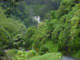Road_to_Hana_009_09012003 - Approaching the Waikamoi Stream