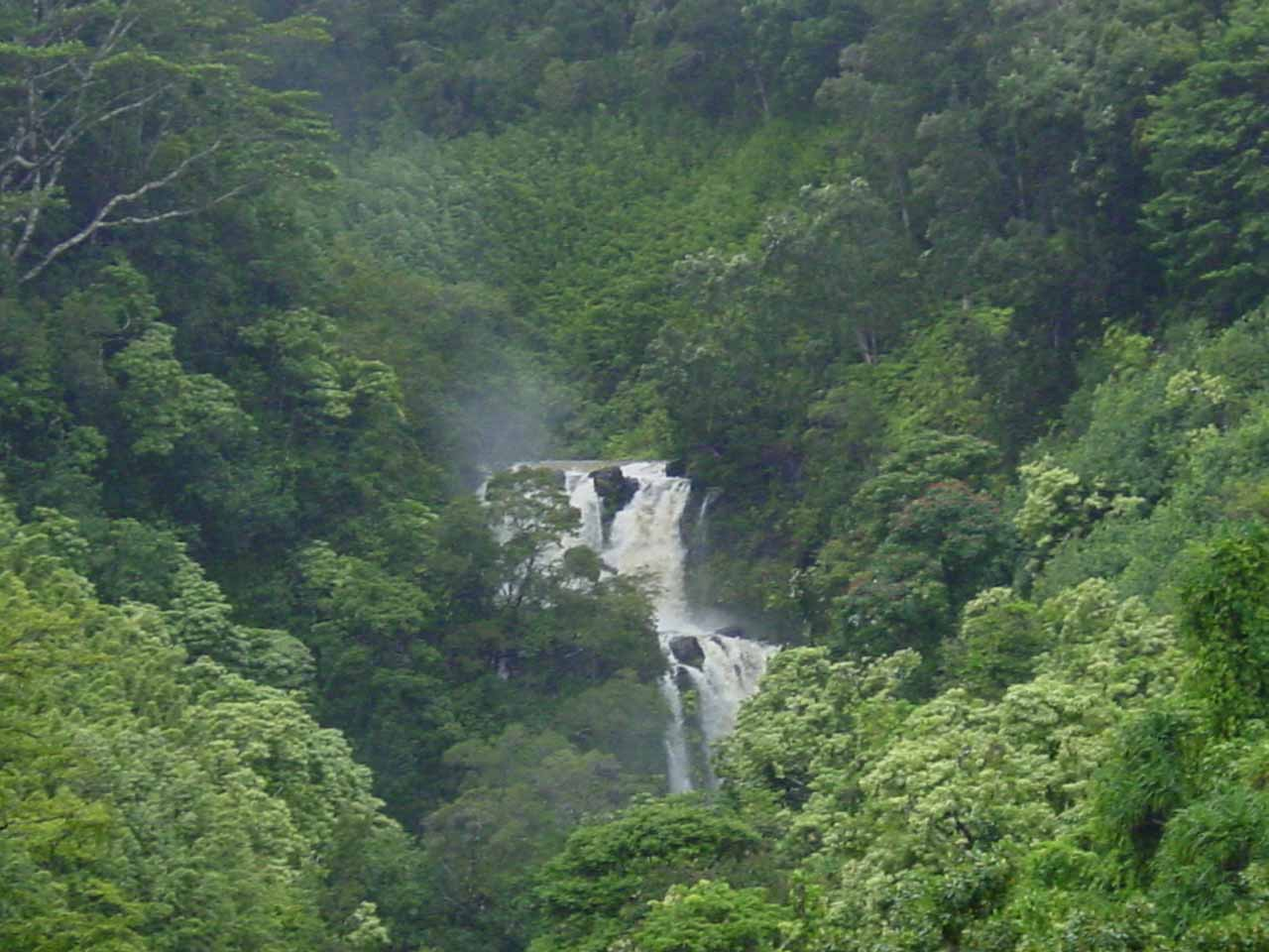 The waterfall on Waikamoi Stream