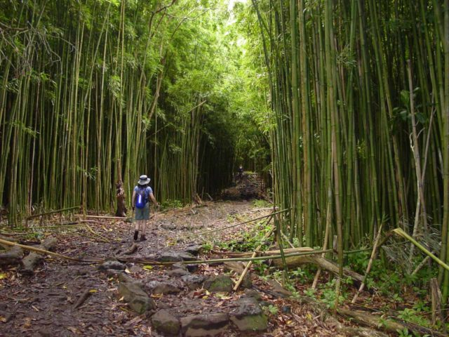 Road_to_Hana_212_09032003 - Julie entering the bamboo forest