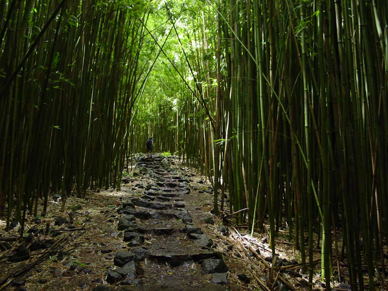 Julie up ahead deep in the bamboo forest