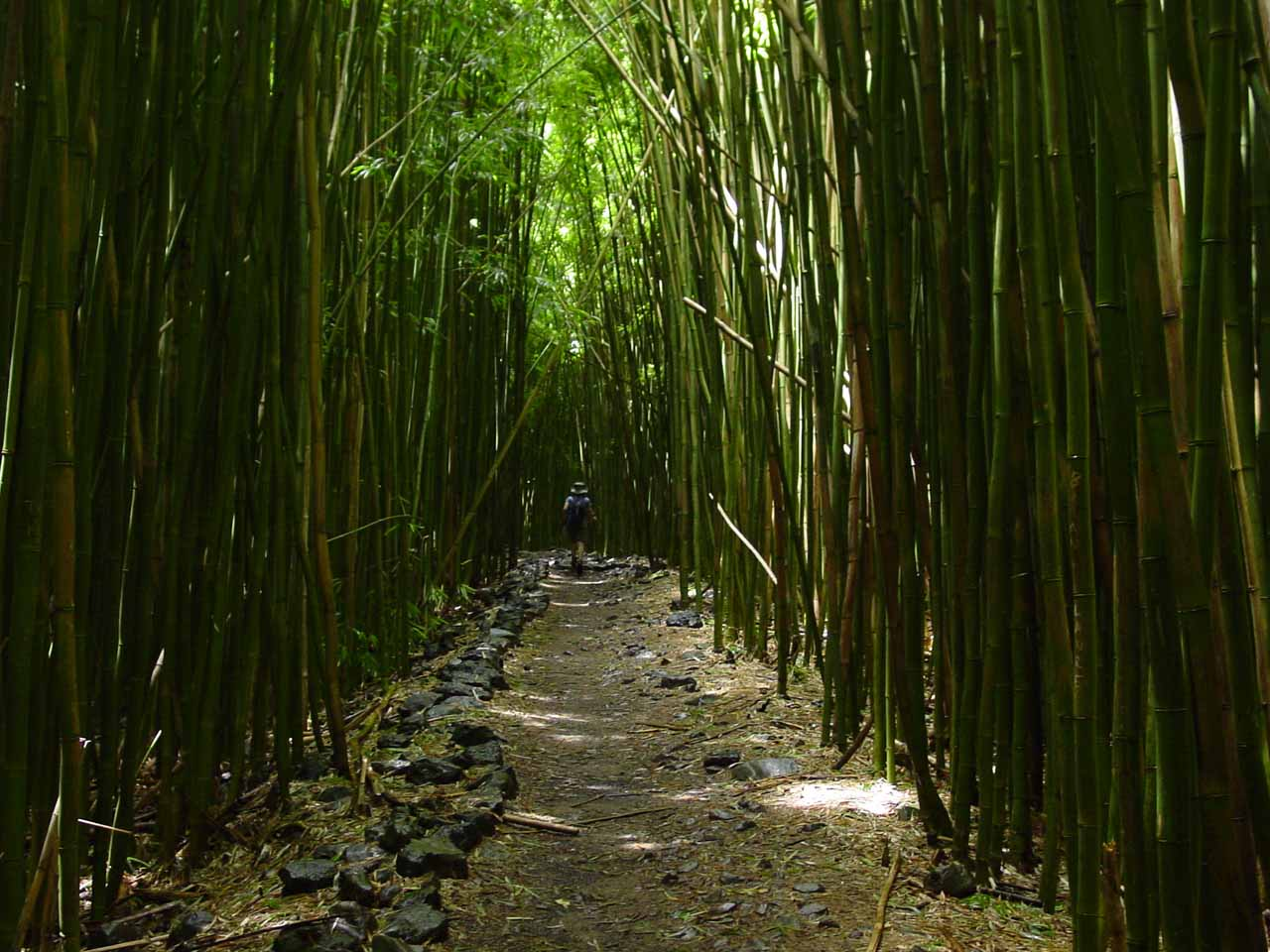 Still in the bamboo forest