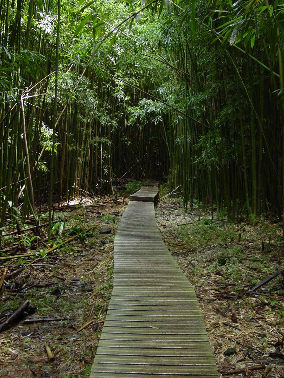 Hiking within the darkness of the bamboo forest