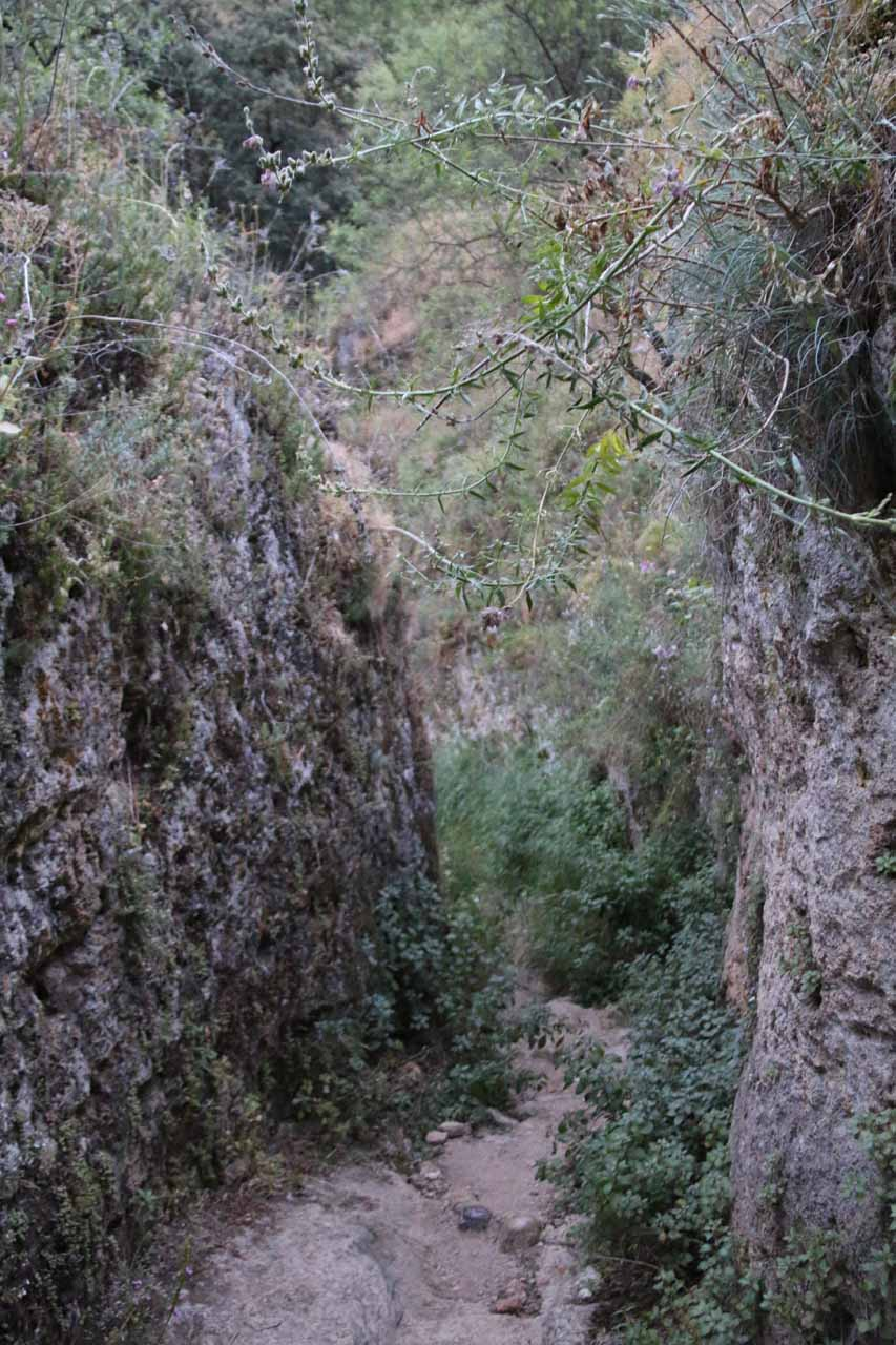 The somewhat rough and overgrown trail beneath the Murallas de la Albacara leading me somewhere even deeper into the Tajo Gorge