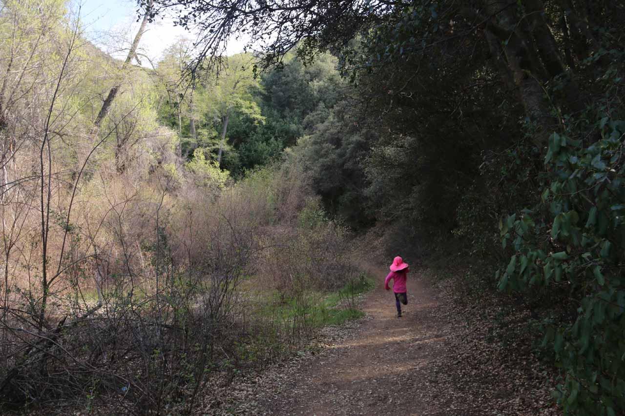 Tahia running ahead on the Rose Valley Falls Trail