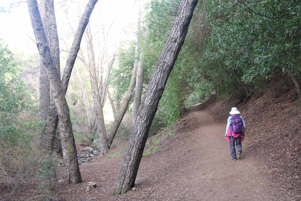 The trail was pretty obvious to follow though it did slope fairly gently uphill to the Rose Valley Falls