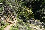 Rubio_Canyon_025_04142020 - Approaching the last switchback on the way down to the Rubio Canyon Creek