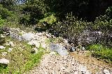 Rubio_Canyon_032_04142020 - Still pursuing the Rubio Canyon Falls as the stream scramble was a combination of trail skirting the creek and fighting the overgrowth and bouldering obstacles