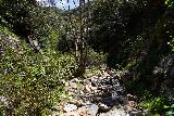 Rubio_Canyon_054_04142020 - Context of another intermediate cascade alongside the creek responsible for the Rubio Canyon Falls