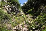 Rubio_Canyon_126_04142020 - Looking back up at the gully that led me to the possibility of scrambling down to the Grand Chasm Falls as well as Thalehaha Falls and others even further up Rubio Canyon