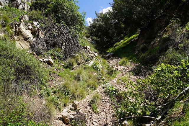 Rubio_Canyon_126_04142020 - Looking up at the steep gully leading towards the even steeper scramble to Grand Chasm Falls and the overlook of Thalehaha Falls