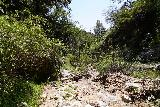Rubio_Canyon_139_04142020 - More overgrowth scrambling within the creek responsible for Rubio Canyon Falls as I was heading back