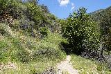 Rubio_Canyon_145_04142020 - Ascending the switchbacking narrow trail leading up to the trailhead for Rubio Canyon between the pair of homes on Rubio Vista Drive