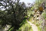 Rubio_Canyon_147_04142020 - Continuing back up the switchbacking narrow trail leading back up to the trailhead for Rubio Canyon by Rubio Vista Drive
