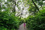 Ruby_Beach_006_06222021 - Tahia going through the lush foliage-lined path en route to Ruby Beach
