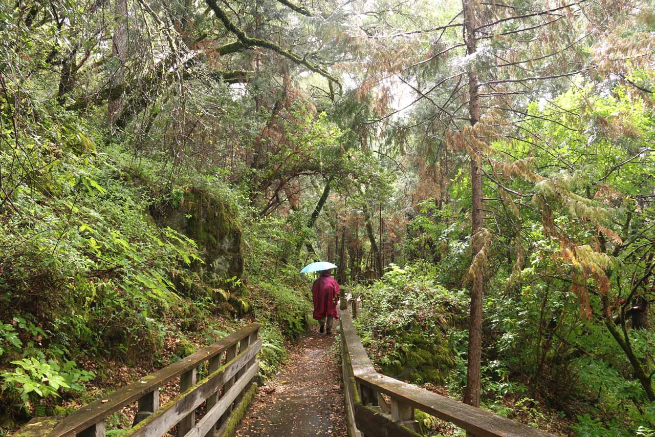 The Independence Trail West was surrounded by very lush scenery that kind of reminded me of the kind of conditions Julie and I encountered when hiking in Oregon