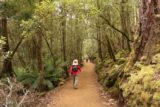 Russell_Falls_17_012_11272017 - Julie on the lush Russell Falls Track as we were made to take a slightly longer course of the loop walk due to trail work being done on the handicapped access route during our late November 2017 visit