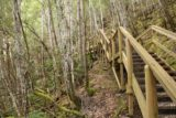 Russell_Falls_17_068_11272017 - Continuing up the wooden steps leading to the top of Russell Falls on our late November 2017 visit