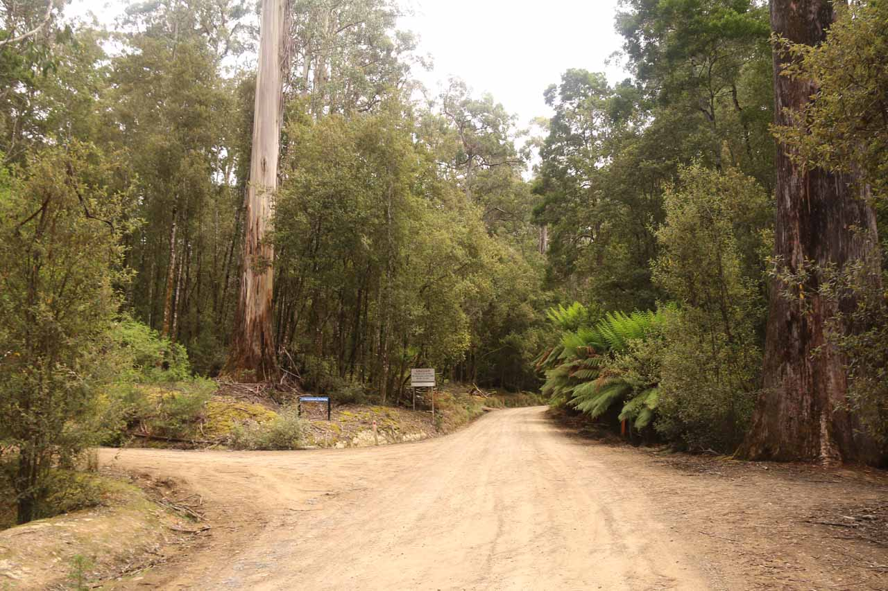 Context of the Lake Dobson Rd right at the Tall Trees Walk car park and the start of the Lady Barron Falls Track