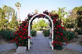 Sacramento_021_04102021 - A rose-adorned archway at the rose garden within the Capitol Park in Sacramento