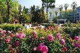 Sacramento_032_04102021 - More roses surrounding the rose garden in Sacramento's Capitol Park