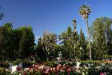 Sacramento_041_04102021 - Another contextual view of the rose garden in Sac-town's Capitol Park