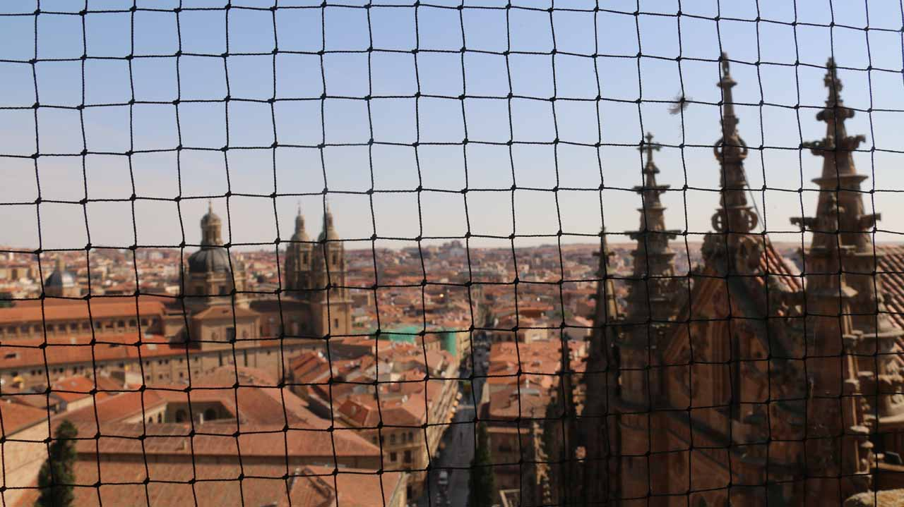 No panoramas from the bell tower of the New Cathedral because of these nets