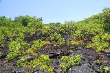 Saleaula_Lava_Fields_059_11152019