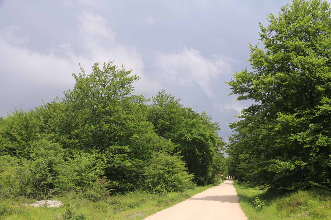 The wide trail, which appeared to be a former road, provided very easy and flat walking. Notice the dark clouds threatening to dump some rain