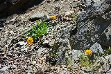 San_Antonio_Falls_046_05082020 - Looking up at a few scatterings of wildflowers in bloom during our May 2020 hike to San Antonio Falls