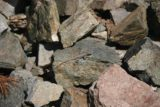 San_Antonio_Falls_095_03282010 - We noticed this lizard trying to blend in with the rocks while on our return hike from San Antonio Falls in late March 2010