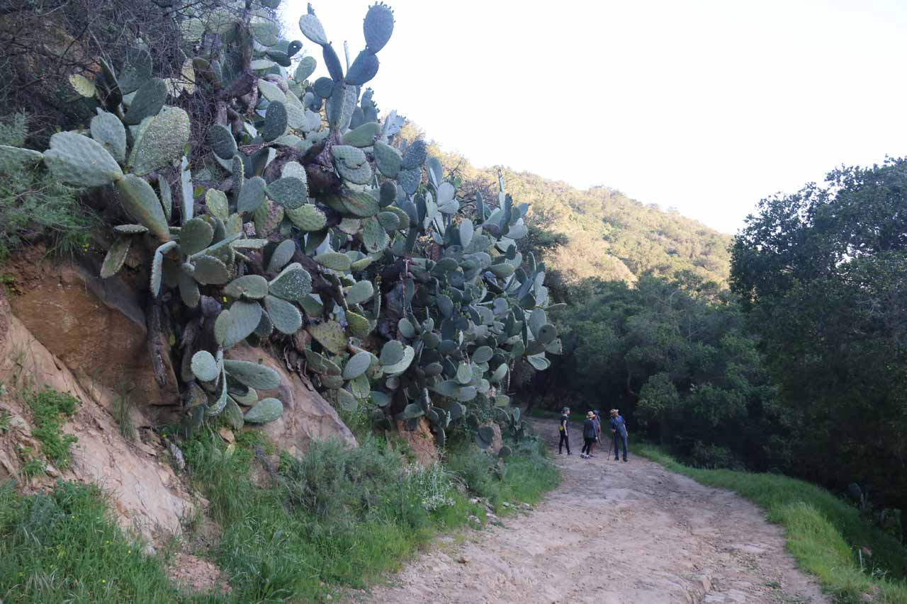 Passing by the cacti again along the San Ysidro Trail