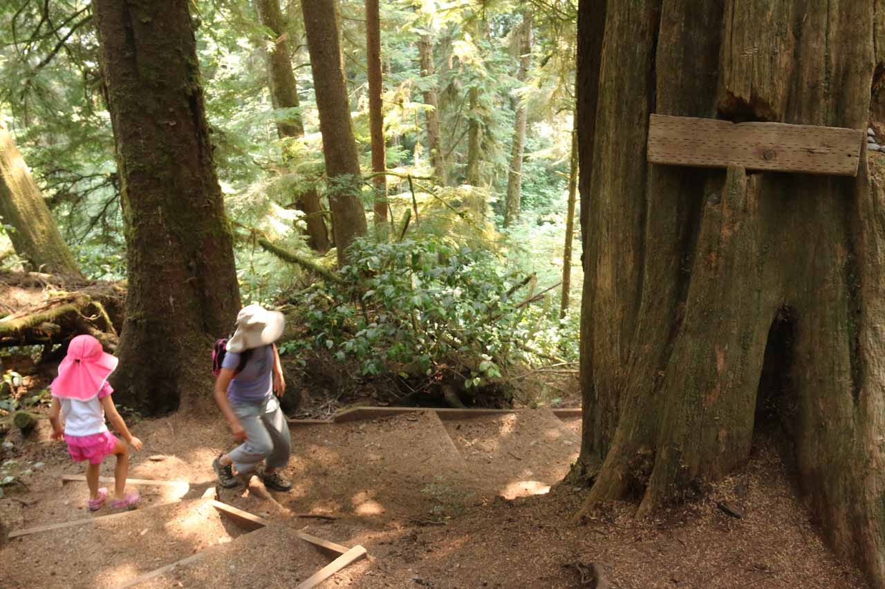 It was a downhill hike on the way to Sandcut Beach so we knew it was going to be a little tougher on the return hike