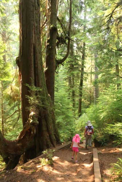 Sandcut_Beach_009_08032017 - Julie and Tahia passing through the temperate rainforest flanked by ferns and tall trees as we headed down to the Sandcut Beach