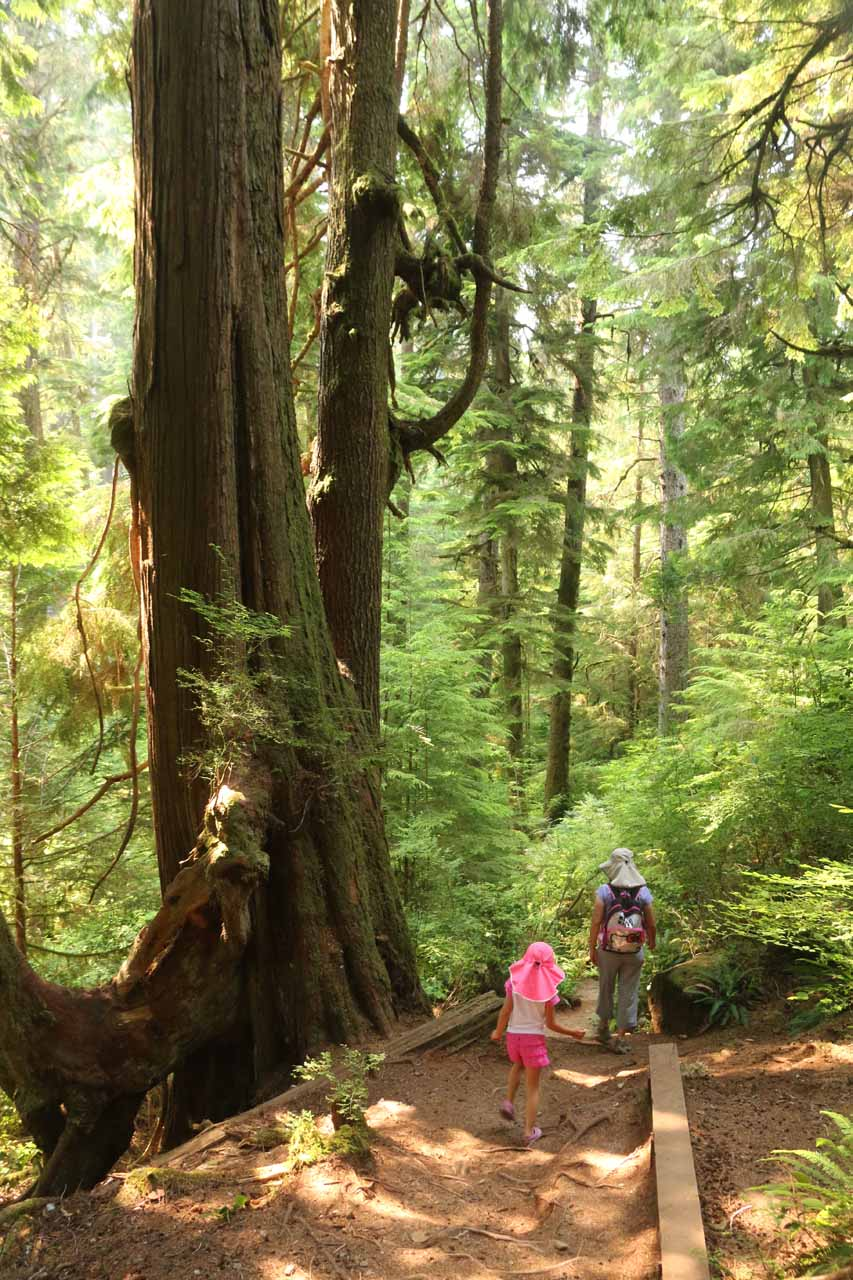 The Sandcut Beach Trail was well-maintained as it meandered between tall trees and ferns