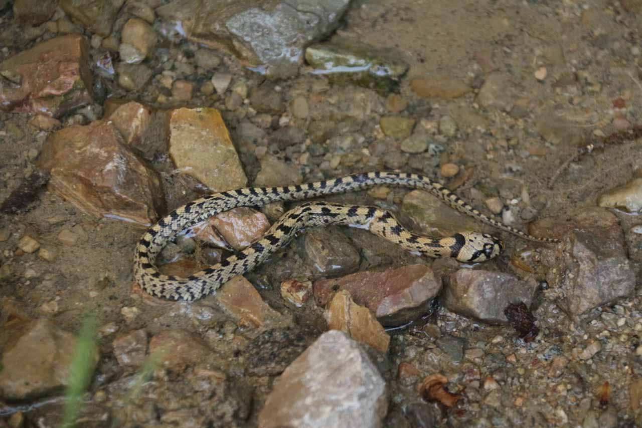 Just to highlight how hot and dry it had been by the time we had visited the Sant Miquel de Fai, we noticed this snake right off the trail. We don't know if it's poisonous, but we had to be real careful about where we stepped