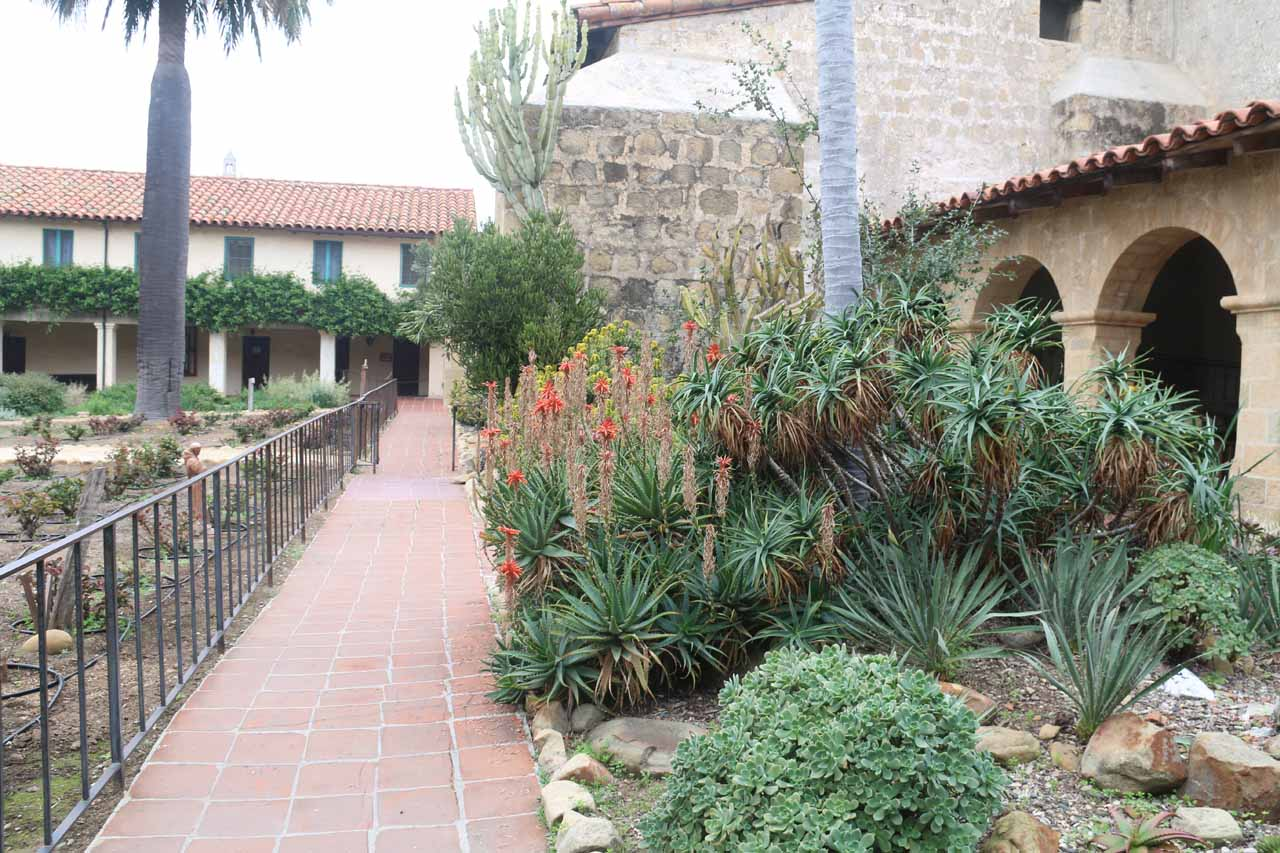Desert vegetation within the tour grounds of the Old Mission