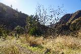 Santa_Paula_Canyon_445_02052021 - Heading back from the Big Cone Camp towards the trailhead