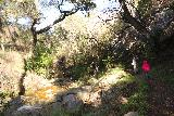Santa_Ynez_Falls_047_01192019 - Julie and Tahia continuing to follow the Santa Ynez Canyon Trail as it skirted alongside the creek en route to the Santa Ynez Falls