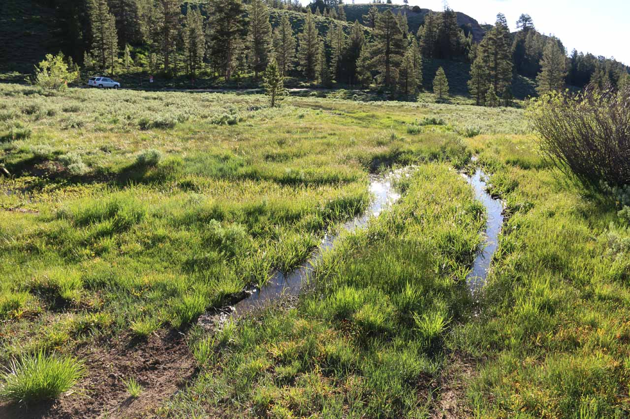 During our hike through Sardine Meadow, we encountered some muddy sections like this one