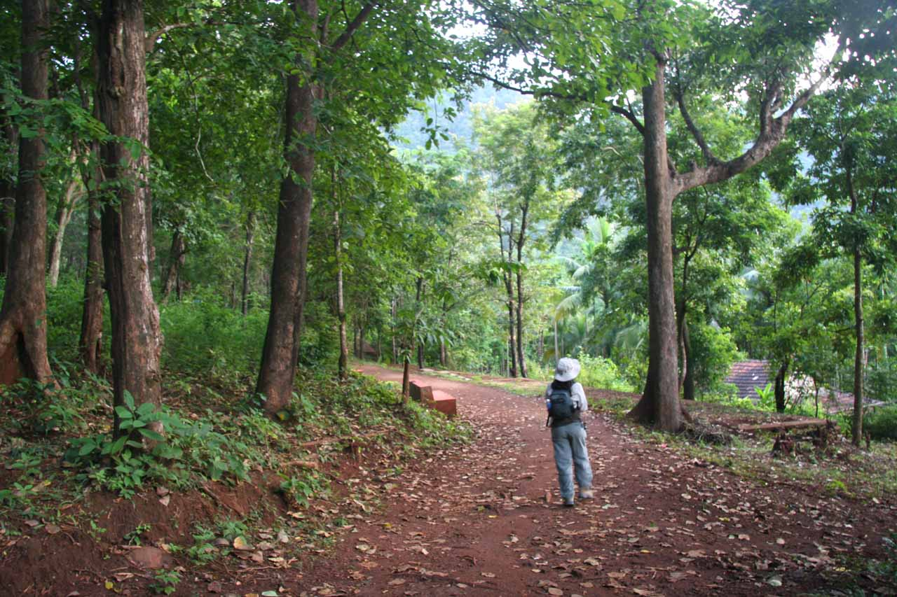 Lush surroundings on the trail to Sathodi Falls