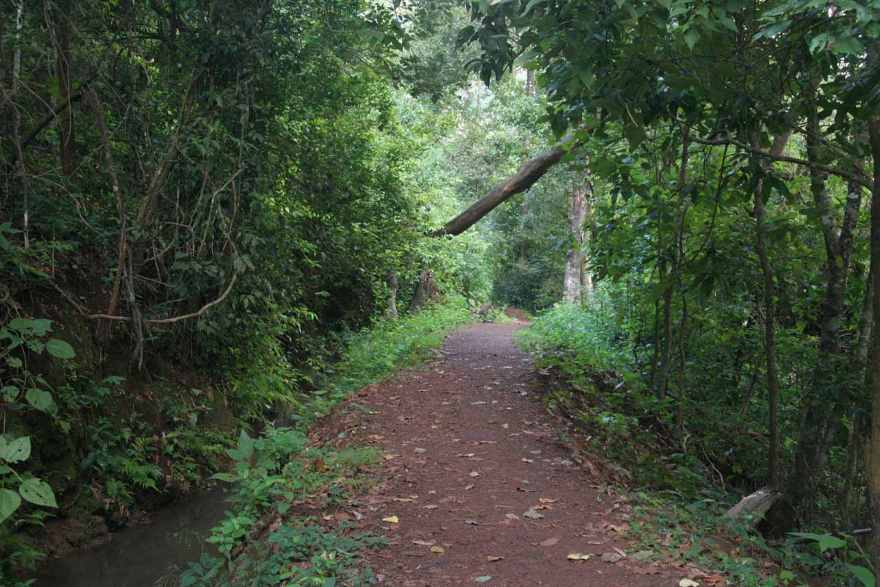 The lush walkway leading closer to Sathodi Falls