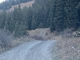 Schofield_Pass_Rd_026_iPhone_10172020 - Encountering a fox or coyote that crossed the Schofield Pass Road in the hamlet of Schofield