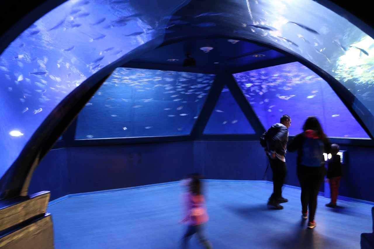 The Sea Life Aquarium at Legoland in Carlsbad, CA