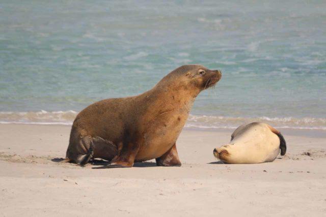 Seal_Bay_057_11122017